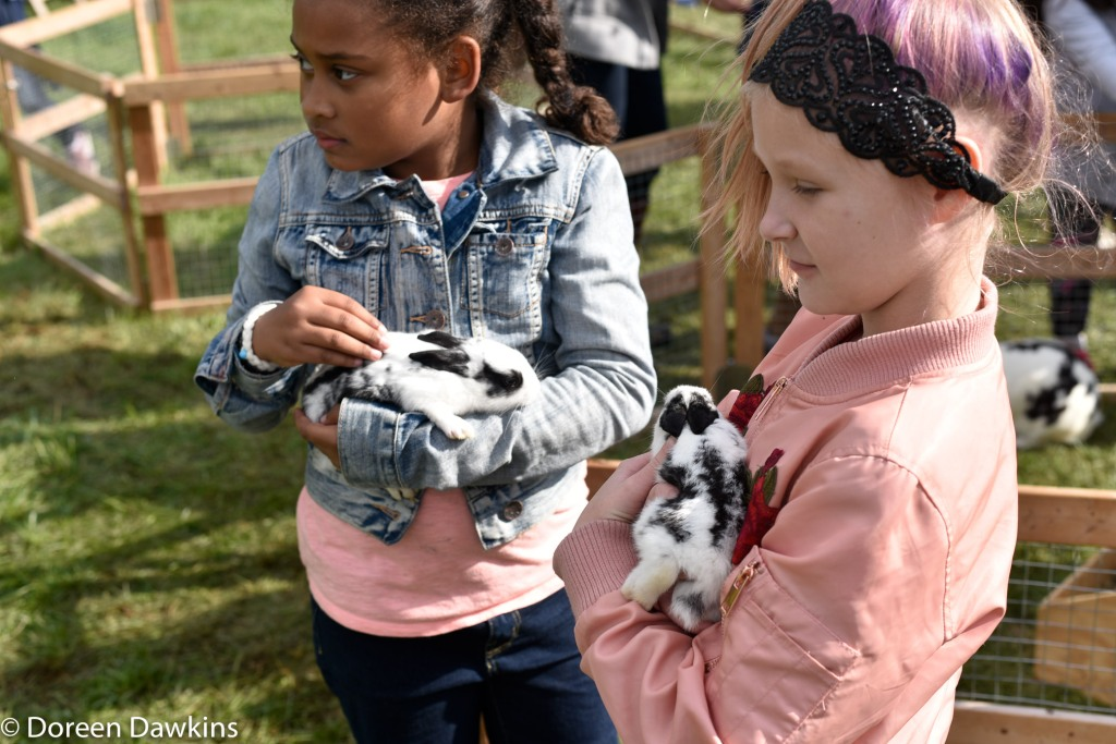 Enjoying the petting zoo!, Harvest Moon Festival 2018