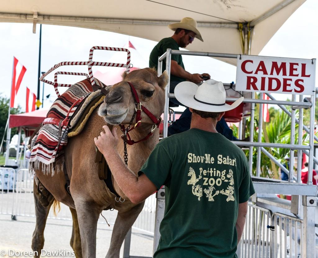 Camel rides, Ohio State Fair 2019